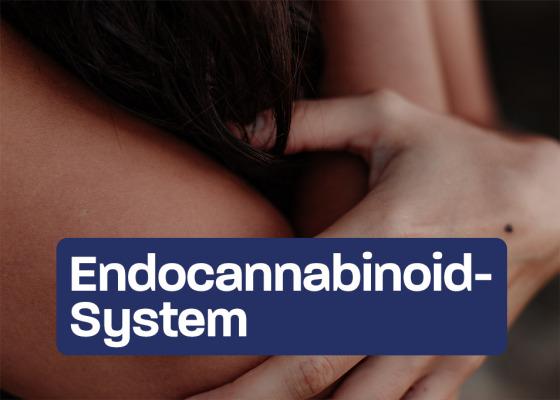 The Endocannabinoid System - The Endocannabinoid System: How CBD works.